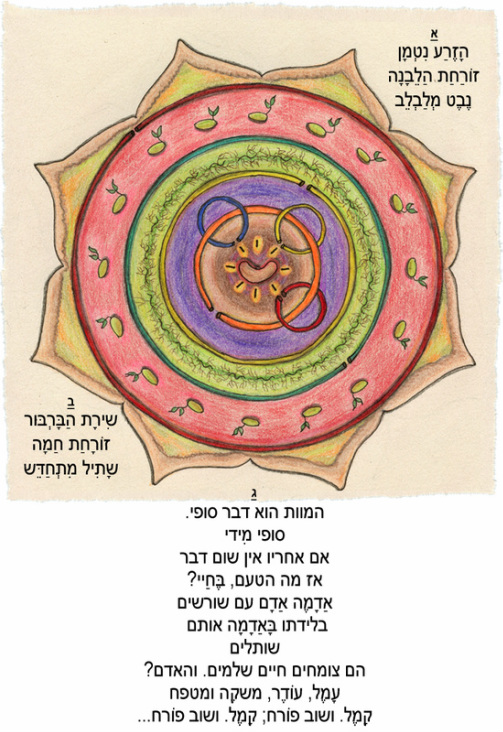 mandala, life cycle, seed, meital reuveny, circle, flower, מנדלה, מעגל חיים, זרע, נבט, מיטל ראובני, פרח, מוות, חיים